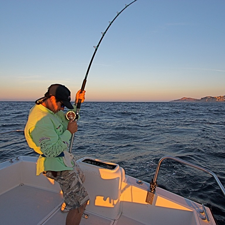 Bluecabo what to do in cabo san lucas and san jose del cabo for Los cabos fishing charters