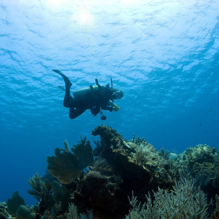Scuba diving in Los Cabos